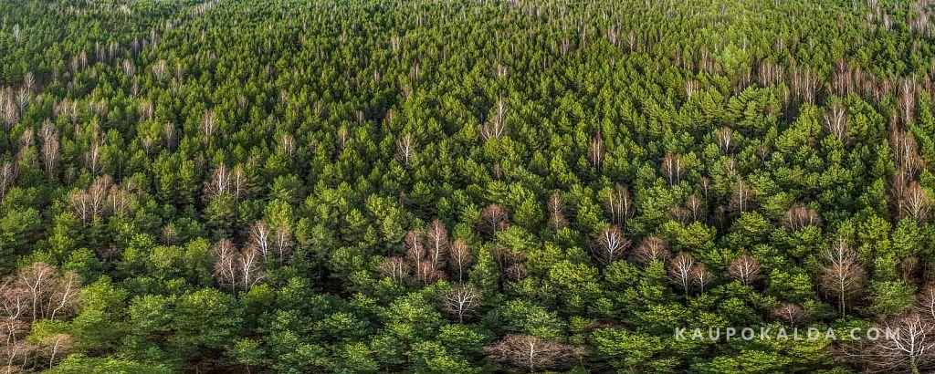 Metsa läinud panoraamop